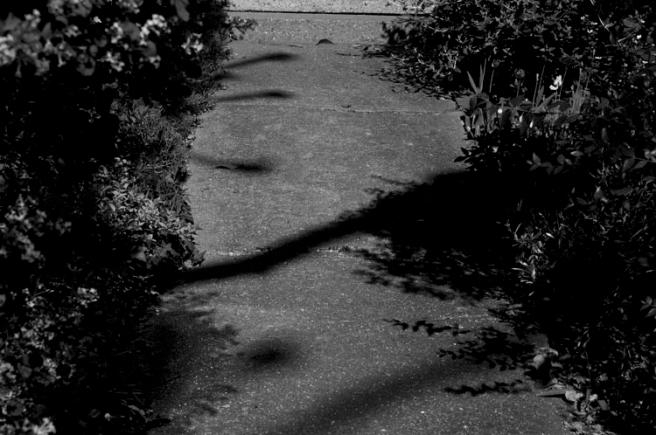 path gardeng.jpg