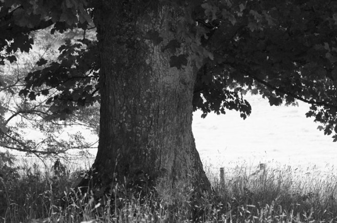treeg.jpg