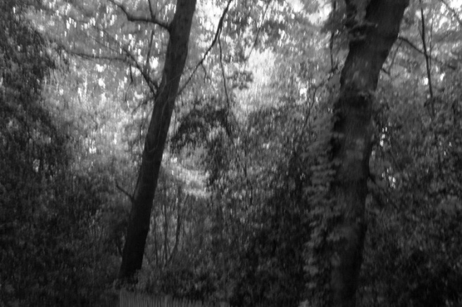 trees24g.jpg